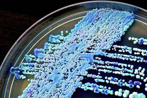 Candida yeast: The 411 on fungal infections