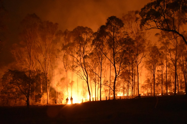 During bushfire crisis, Australia's koala 'beds are burning' down