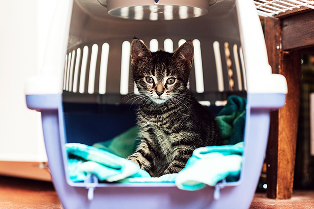 Ethology and veterinary practice: How much space does a cat need?