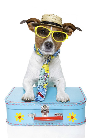 Top pet fashion trends to watch in 2014