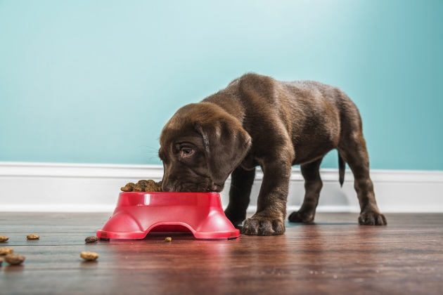 Pet nutrition myths: A review of the facts — part 1