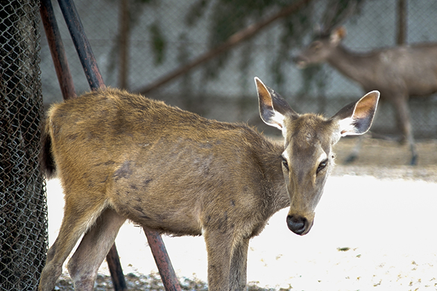 How can hunters help slow the spread of ​chronic wasting disease?