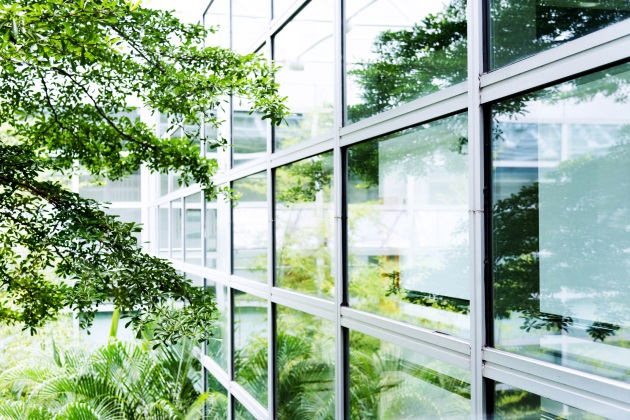 The brain on nature:  The why behind biophilic design