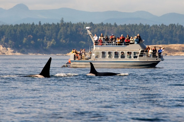 Top 10 US whale watching sites