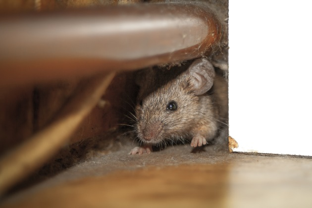 3 ways pests can hurt businesses