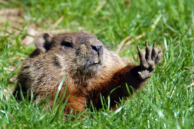 The groundhog effect for associations