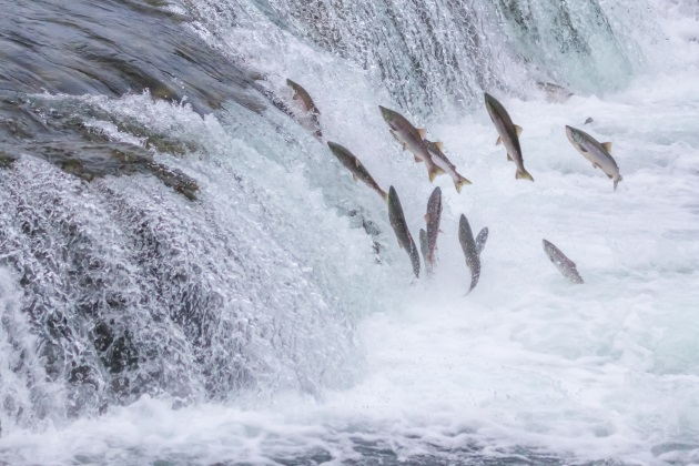 Supreme Court rules on controversial Alaska waters case