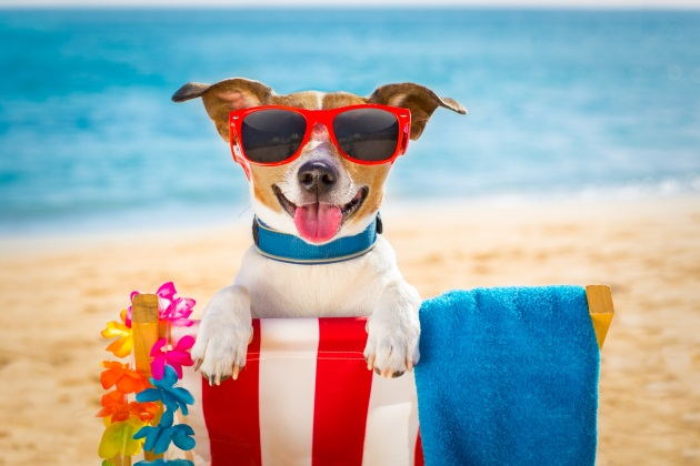 Dog-friendly resorts, vacations are on the rise