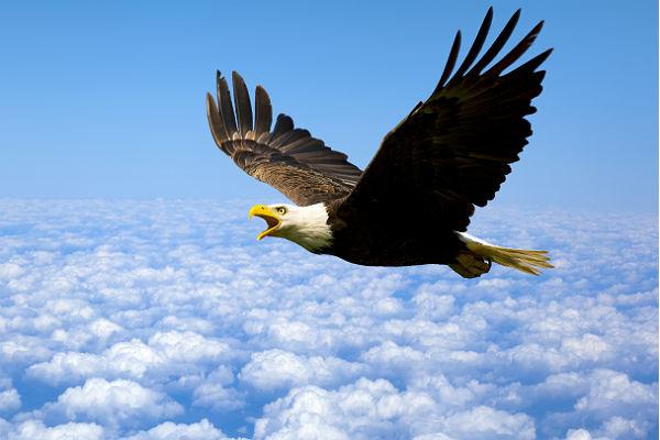 Interior designers should hunt eagles, not turkeys