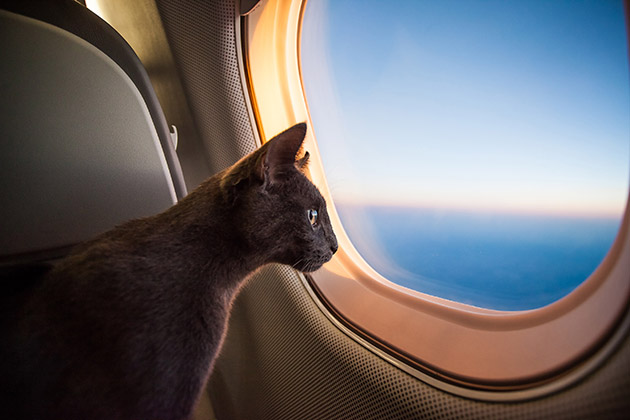 Pets on a plane? Take care before sending fur and feathers to the air
