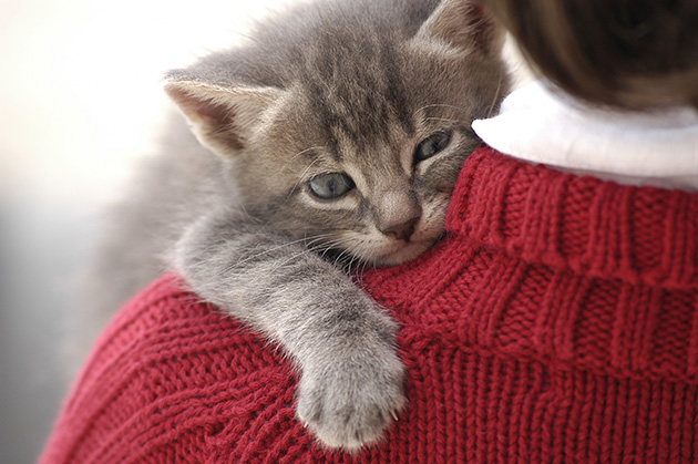 Ethology and veterinary practice: Feline maternal-human mismatches