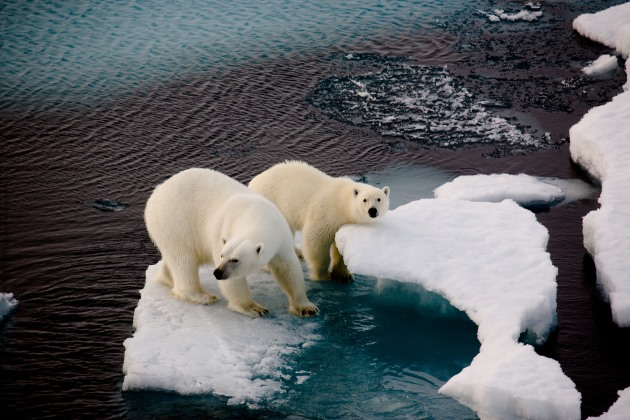 As 2020 begins, news from the Arctic offers scant environmental hope