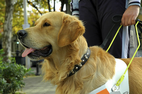 Does your guest have a service dog?