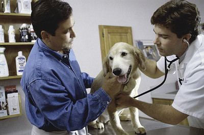 5 things to consider before starting a veterinary practice