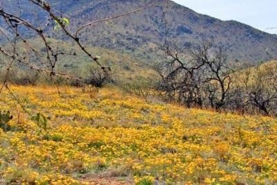 Cochise County: A beautiful little corner of Arizona
