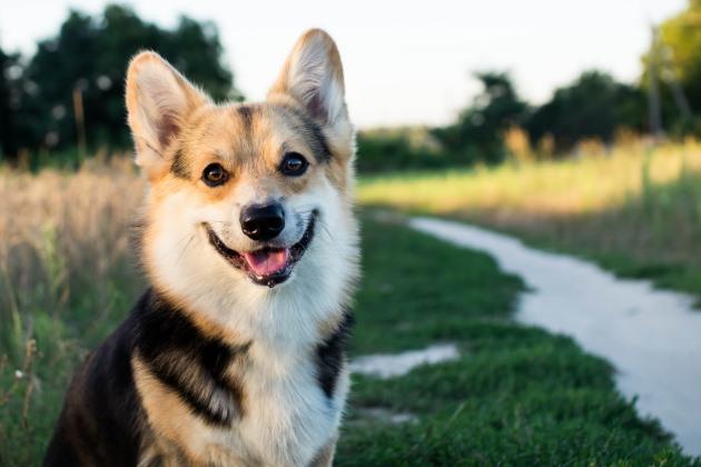 Ethology and veterinary practice: Ethology of canine play