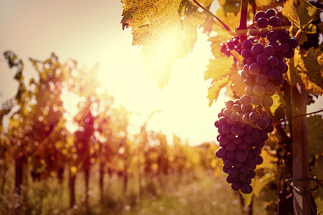 Sustainable wine-growing practices are taking over