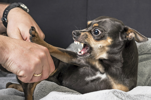 Ethology and veterinary practice: When bonds that worked no longer do
