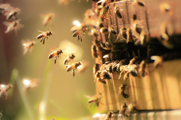EPA approves bee-killing pesticide use as populations of the insect crater