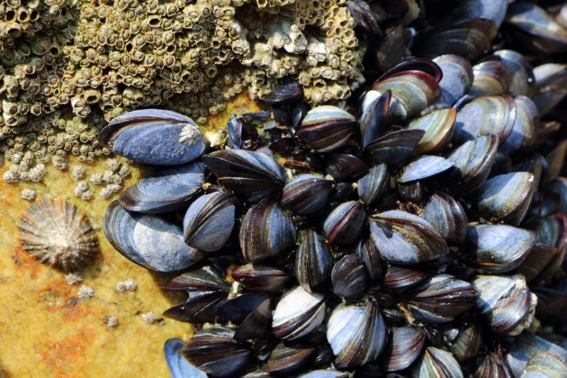 Why Wisconsin's recent survey of mussels is important