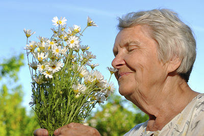 Latest Alzheimer's research passes the smell test