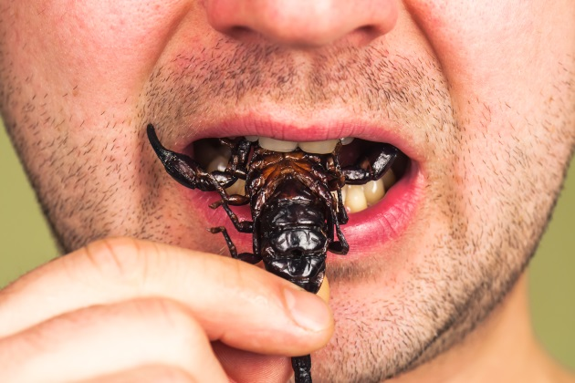 Eating insects could help save the planet