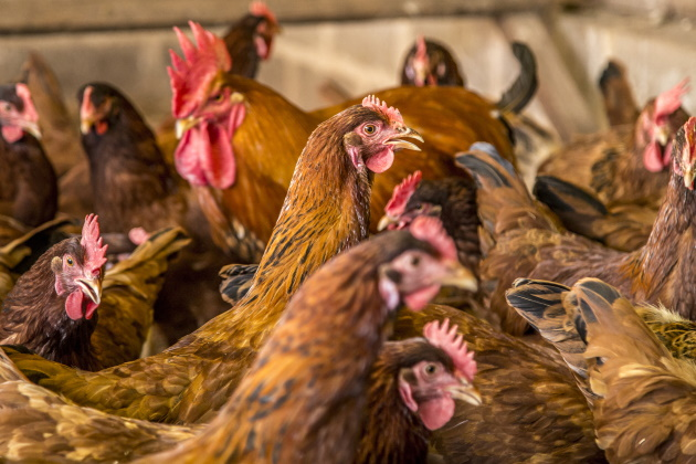 Legal fights come to factory farms as grassroots organizations push back