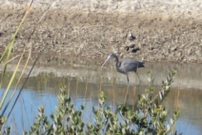 Birding and RVing in the West