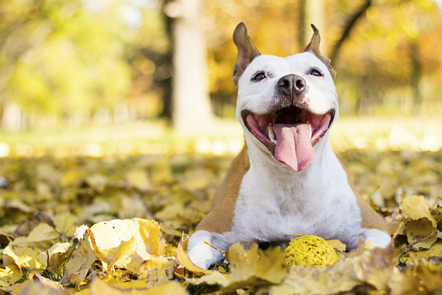 Keep these pet tips in mind as fall arrives