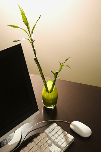 Feng shui: Creating the right environment for your medical office