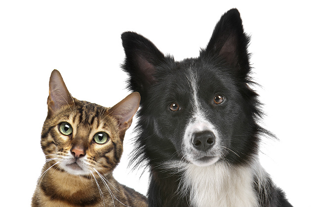 Ethology and veterinary practice: Canine and feline sexual politics