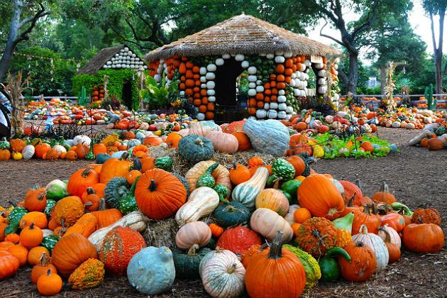 Multibrief 11 of america s best fall festivals - Botanic gardens pumpkin festival ...