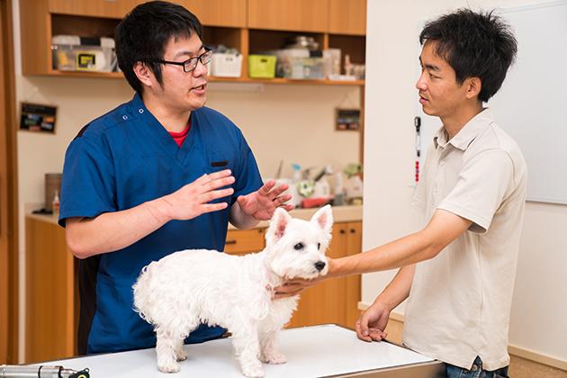 Ethology and veterinary practice: Companion animal behavior-related vocabulary