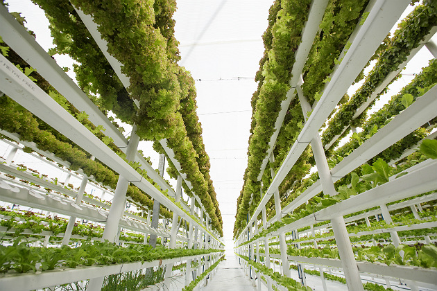 How local, urban farming could help alleviate international food supply chain issues