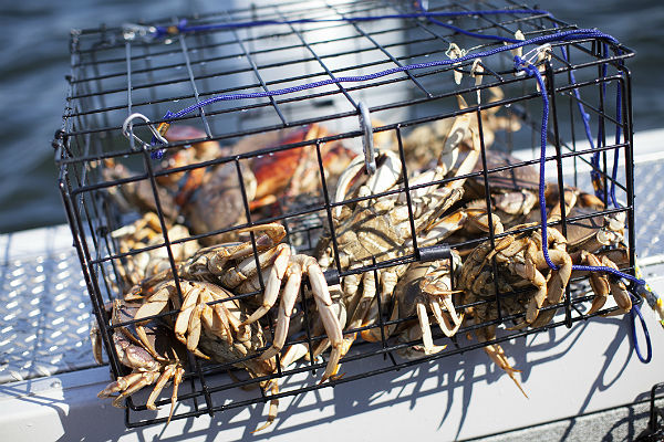 Image result for crabbing