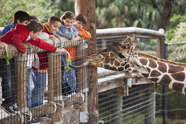 8 great American zoos