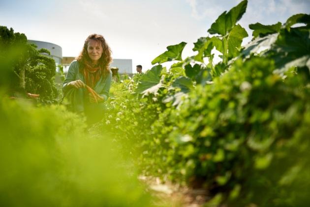 Innovative urban farming can meet the demand for fresh produce