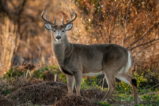 The best ammo choices for deer season