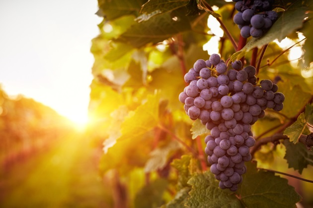 Natural wine revolution takes hold