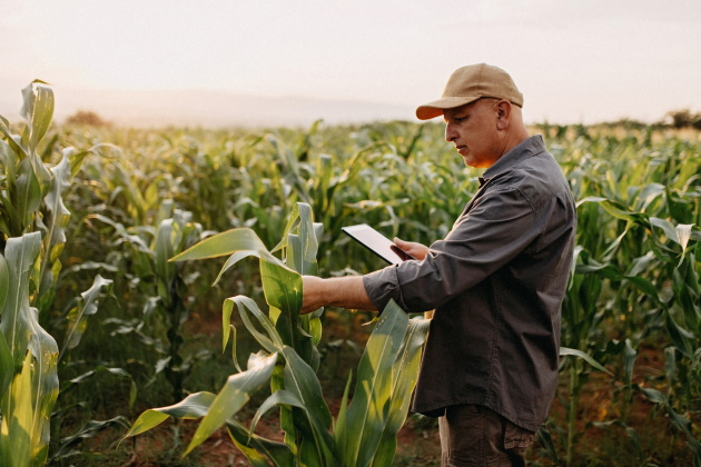 How AI is transforming the agricultural sector