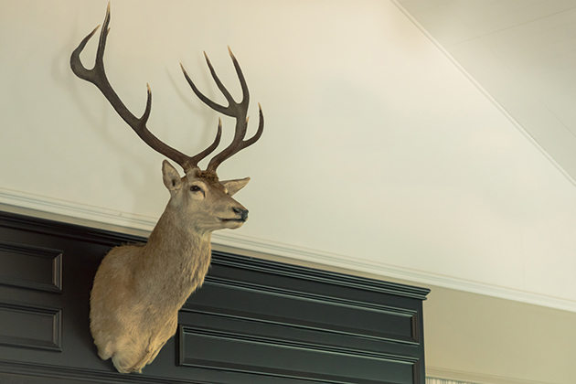 Set your taxidermist up for success with these trophy care tips